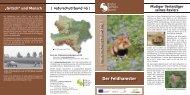Der Feldhamster - Naturschutzbund NÖ