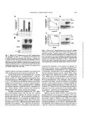 The Requirements for Ca , Protein Phosphorylation, and ... - Page 4