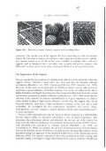 CIIA PTER TEN BIOFILM REACTORS - Universidade do Minho - Page 6