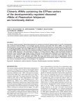 rRNAs of Plasmodium falciparum - Page 2