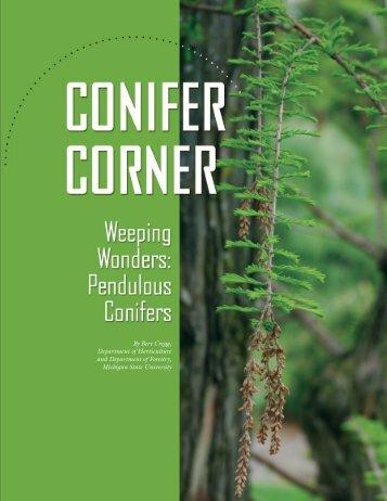 Pendulous Conifers - Gardening in Michigan - Michigan State ...