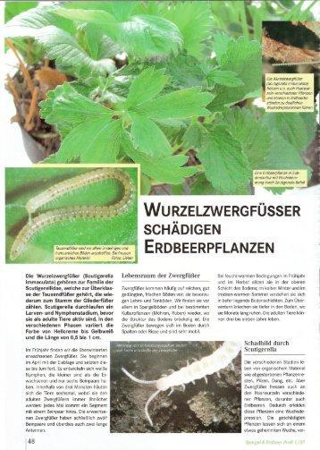 Die Wurzelzwergfüßer (Scutigerella immaculata ... - Fragaria Holland
