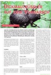seeland verbreitet. Schadbild - Fragaria Holland