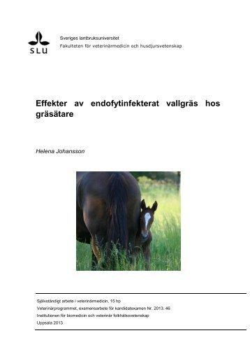 Effekter av endofytinfekterat vallgräs hos gräsätare - Sveriges ...