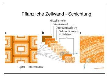 Pflanzliche Zellwand - Schichtung