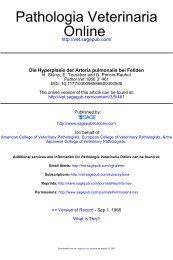 Die Hyperplasie der Arteria pulmonalis bei Feliden