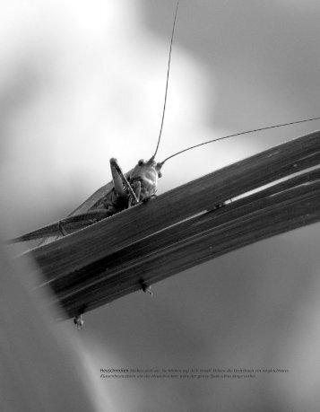 Heuschrecken sind coole Säue - Hinterland Magazin