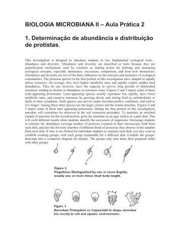 BIOLOGIA MICROBIANA II – Aula Prática 2 1. Determinação de ...