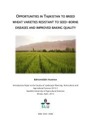 opportunities in tajikistan to breed wheat varieties resistant to seed ...