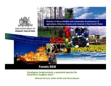 Forests NSW - Eucalyptus longirostrata - proceedings.com.au