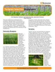 Turfgrass Selection Bluegrasses - UT Extension - The University of ...
