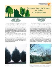 Evergreen Trees for Screens and Hedges in the ... - UT Extension