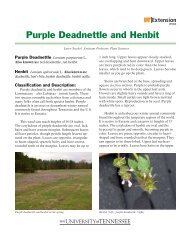 Purple Deadnettle and Henbit - UT Extension