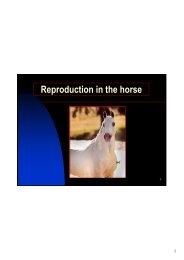 Reproduction in the horse - UT Extension