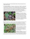 HortTips NewsletterVol. 1, No. 1 - University of Maryland Extension - Page 4
