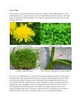 HortTips NewsletterVol. 1, No. 1 - University of Maryland Extension - Page 6