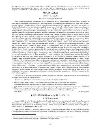 ASPLENIACEAE 1. ASPLENIUM Linnaeus, Sp. Pl. 2: 1078. 1753.