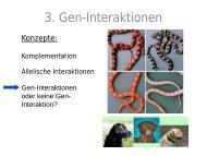 3. Gen-Interaktionen - OpenWetWare