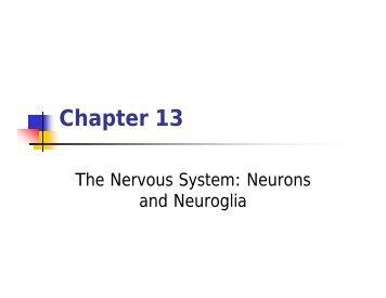 Ch 13 Neurons and Neuroglia.pdf - Faculty.piercecollege.edu