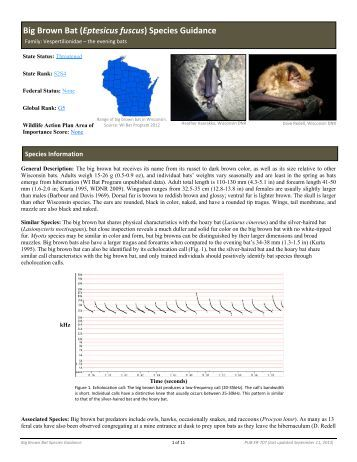 Big Brown Bat - Wisconsin Department of Natural Resources