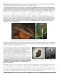 Big Brown Bat - Wisconsin Department of Natural Resources - Page 3