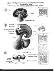 Anatomy Figures - Classes at U. of L.