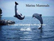 Marine Pattedyr - AU/BIO
