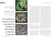Extraordinary features of the reproductive biology of Marchantia at ...