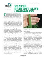 WANTED Dead not Alive: COGONGRASS - Alabama Cooperative ...