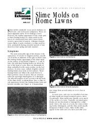Slime Molds on Home Lawns - Alabama Cooperative Extension ...