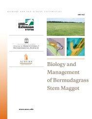 Biology and Management of Bermudagrass Stem Maggot - Alabama ...