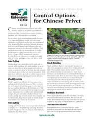 Control Options for Chinese Privet - Alabama Cooperative Extension ...