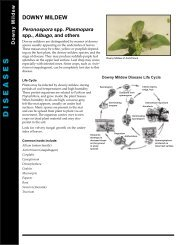 Downy Mildew - BC Ministry of Agriculture, Food and Fisheries