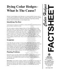Dying Cedar Hedges - What is the Cause? (PDF, 80 KB) - Agriculture