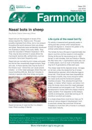 Nasal bots in sheep - Department of Agriculture and Food