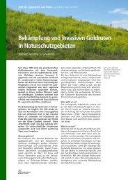 Bekämpfung von invasiven Goldruten in Naturschutzgebieten