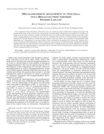 megagametophyte development in potentilla nivea (rosaceae)