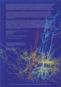 NEUROWISSENSCHAFTEN - Neurowissenschaftliche Gesellschaft ... - Seite 2