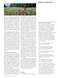 Schlauer Bauer - aufrad.ch - Seite 4
