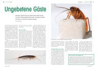 Kakerlaken & Co. - aufrad.ch