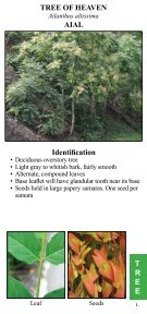 Central Texas Invasive Plants Field Guide - AustinTexas.gov - Page 5