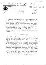 Neue Spezies der Gattung Thorictus Germ. (Col. Thorictidae).