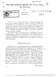 Eine neue canarische Spezies von Thorictus Germ. (Col. Thorictidae).