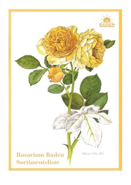 Kletterrose Climbing Goldmarie® goldgelb Kordes-R Rosa Climbing Goldmarie®