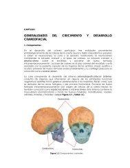 PDF (Generalidades del crecimiento y del desarrollo craneofacial)