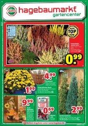 """Hecken-Koniferen Ab Sommerheide """"Garden Girls®"""" Ab Blumen ..."""