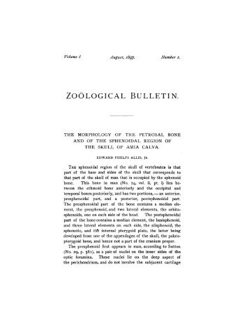ZOOLOGICAL BULLETIN. - The Biological Bulletin