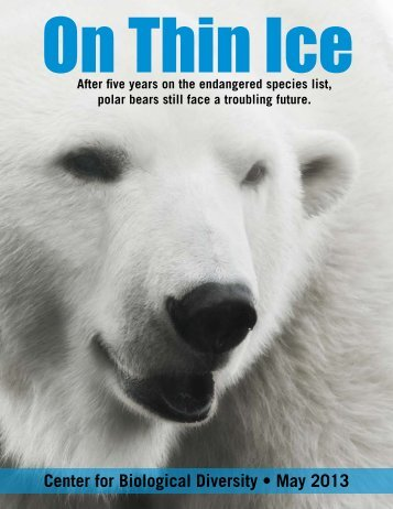 Polar Bears Still On Thin Ice - Center for Biological Diversity