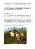 Die Schlehe (Prunus spinosa) - BUND - Seite 2