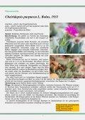 Stapelia gigantea - FGaS - Page 5